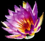 1244813035_lotus